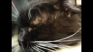 Все О Домашних Животных:  Зачем Водить Кота В Салон, Мнение Специалиста
