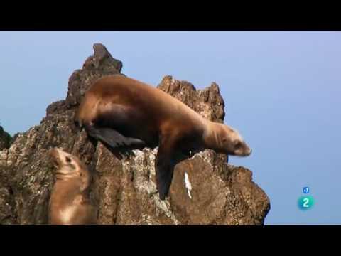 Grandes Documentales-Big Sur  La costa salvaje de California