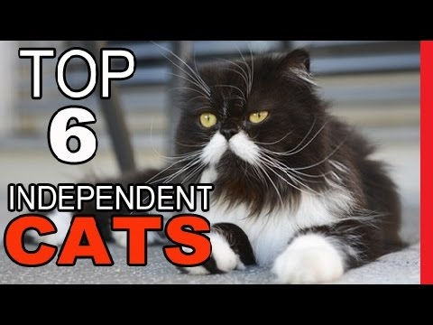 Top 6 Most Independent Cat Breeds