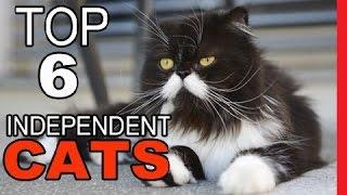 Top 6 Most Independent Cat Breeds