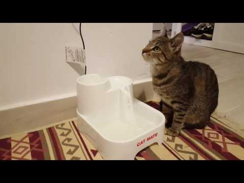 Kitten's first reaction to Cat Mate fountain