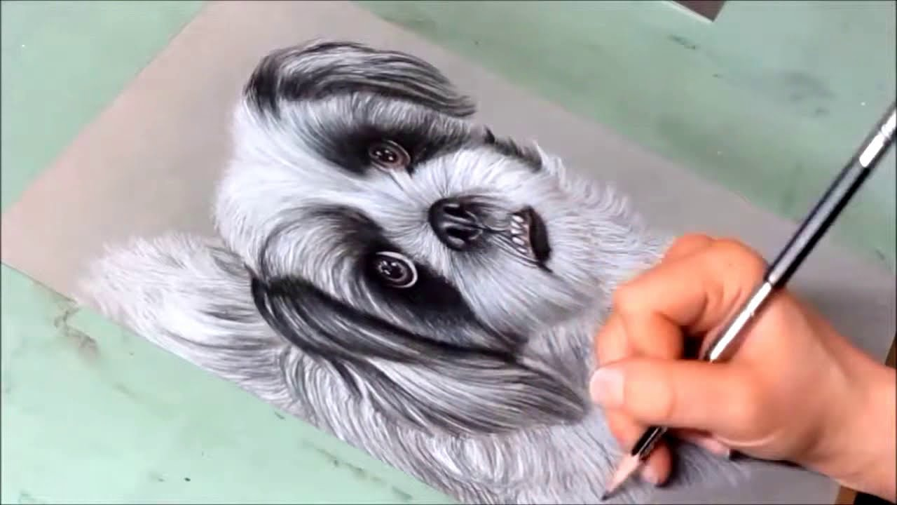 Time Lapse Drawing Georgie The Shih Tzu In Colored Pencil Youtube