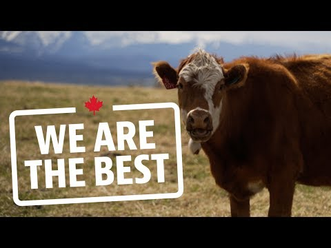Why Alberta's grasslands are the perfect place to raise cattle | We Are The Best