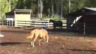 Kanaka Ridge Farms: Chrome '09_01