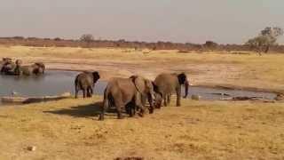 Elephants charge Crocodiles