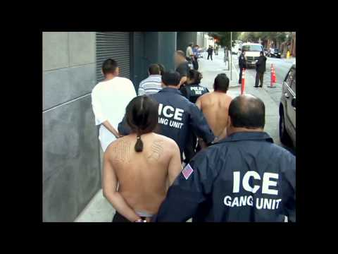 Military Operation Style Rounding MS-13 Gangs