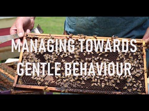 Managing Towards Gentle Behaviour