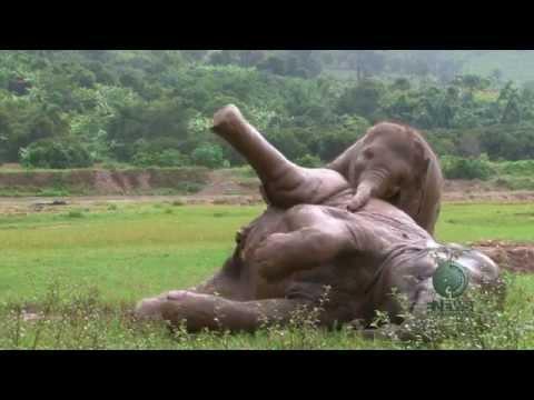 Faa Mai And Baby Elephant Dok Mai