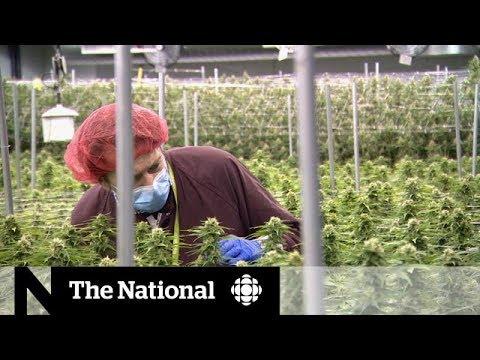 Exporting Canada's pot