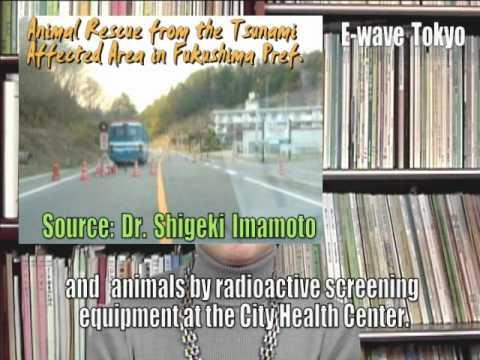 Fukushima Animal Rescue by Komichi Ikeda (E-wave Tokyo 2011)