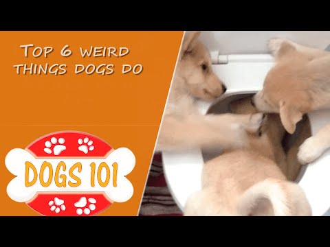 Top 6 Weird Things Dogs Do