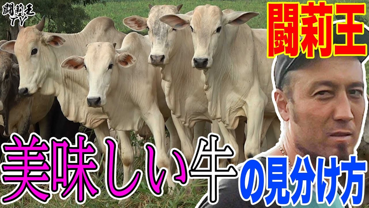 【ど迫力】ブラジルの赤身肉は一番です!牧場主・闘莉王が猛牛50頭を前に肉牛育成法を初披露