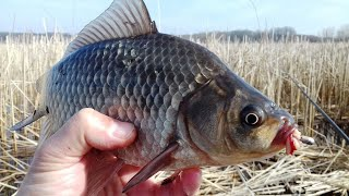 РЫБАЛКА на КАРАСЯ ПОКЛЕВКИ КАРАСЯ на БОКОВОЙ КИВОК Карась на удочку Поймал заморскую чудо рыбу