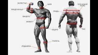 как измерить объемы тела? Как делать замеры тела?