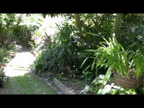 incredible tropical garden brisbane | Walk through our Brisbane Tropical Garden. part three ...