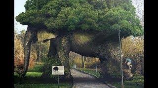 Choáng váng cây cảnh hình con voi 99 tỷ nhất quyết không bán