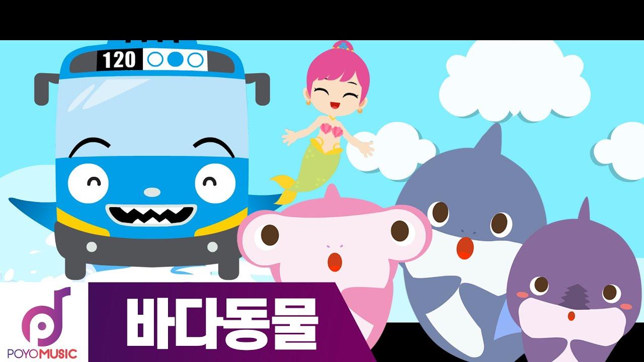 타요 노래 | 바닷속 상어 | 바다동물동요 l DJ타요의 뮤직 스테이션