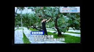 雨の影響についての報道