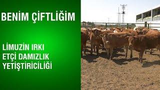 Benim Çiftliğim - Limuzin Irkı Etçi Damızlık Yetiştiriciliği / Rol Model İşletmeler