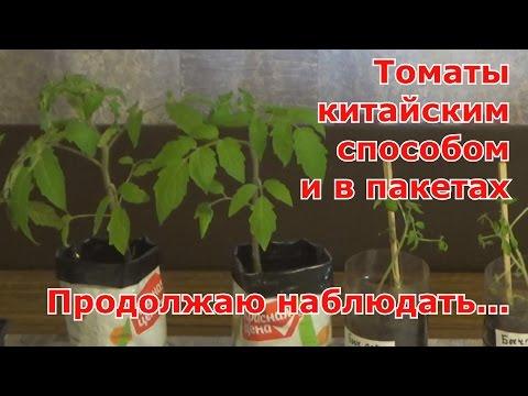 Вопрос: Выращивание помидоров в пакетах без дна. Чем это лучше, чем в почве?