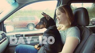 WE GOT A NEW DOG! | Vlog ❯ Day 120