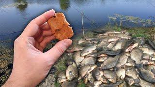Рыба клюёт на каждом забросе Рыбак показал как сделать супер насадку для рыбалки