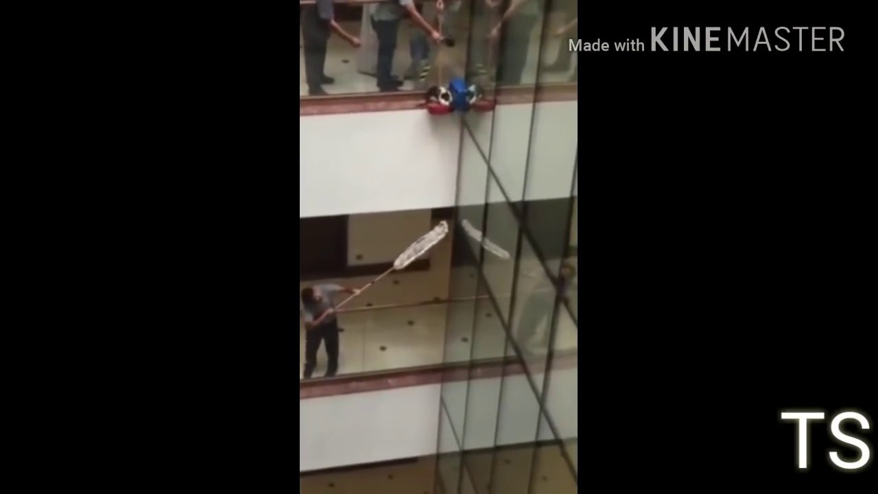 Baby Cat Falls from 10th floor