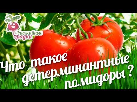 видео: Детерминантные и индетерминантные сорта помидор.