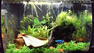 TBL's Fish Tales Live Stre…