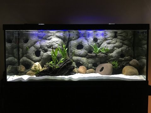 The Pros and Cons of a 3D Background- Part 3 African Cichlids - Universal Rocks Edition