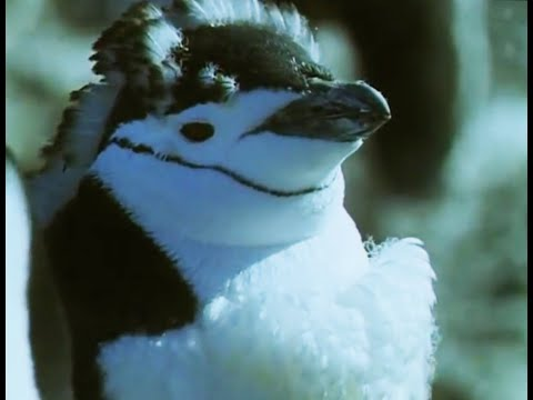 Penguin Colony Shed Feathers at Once! | Life in the Freezer | BBC