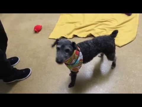 Lucky Is Eager To Meet You and You Might Even See Him Do a Happy Dance