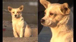 Câu chuyện chó mẹ mang thai ngồi khóc mỗi ngày ở góc đường lấy nước mắt triệu người