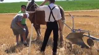 chevaux de trait seebach