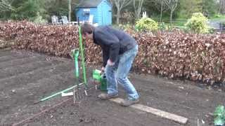 How to Sow Turnip Seeds