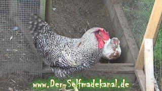 Schalldämmung im Hühnerstall bauen | DIY