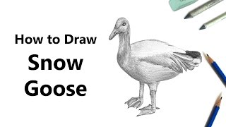 How to Draw a Snow Goose with Pencils [Time Lapse]