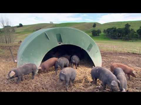 Longbush Free Range Pork