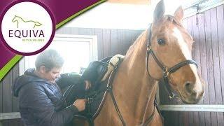 Beruf Pferdewirt - Tim macht ein Praktikum bei Holger Hetzel
