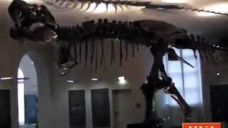 Neue Dinosaurier-Ausstellung im Ottoneum