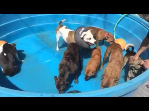 how to get a weaning puppies to drink water