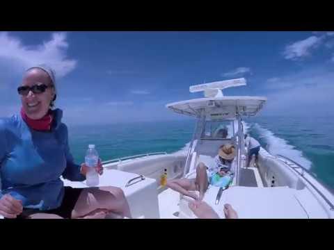 Treasure Cay Green Turtle Marsh Harbor Guana Cay Bahamas July 2018