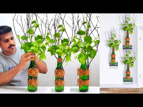 New Creative Ideas for Money Plant Decoration /Gardening Ideas /New Way to Grow Money Plant