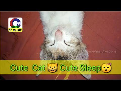 #GEMC #CCMUSIC Cute  Cat 🐱 Cute Sleep😴