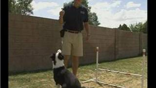 Agility Dog Training: Over Command : Agility Dog Training Over Command: Competition