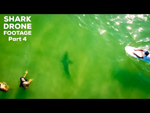 Amazing Shark Drone Footage | Sharks Hunting In The Shallows | Sharks Stalk Surfers At NSB Inlet