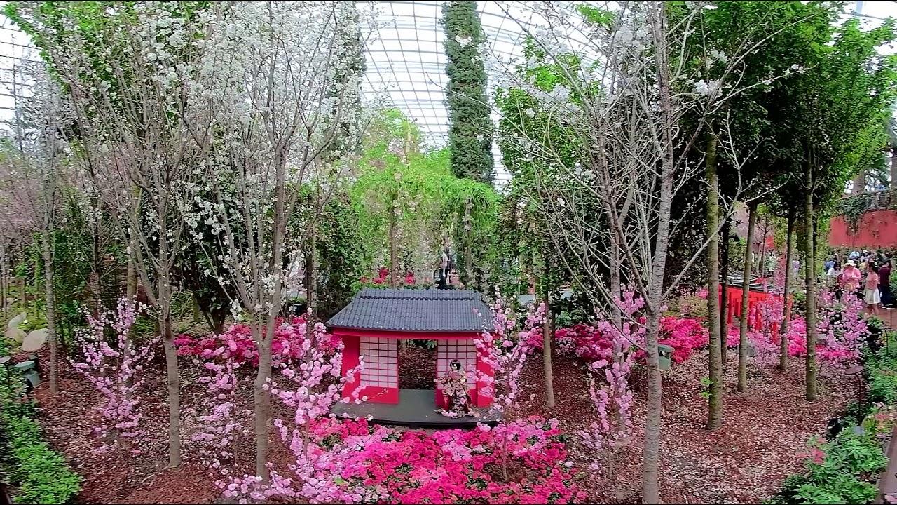 4K 360 Video: Sakura Festival, Flower Dome, Gardens By The Bay, Singapore  (4).