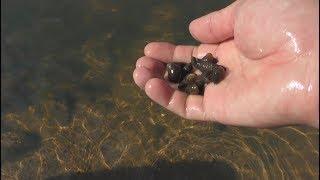 Ngày Hè : Phần 1: Bắt ốc và hái cây thủy sinh ở suối cực đẹp