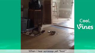 Try Not To Laugh Funny -Cats And Dog Compilation 2019