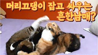 (고양이랑친칠라랑) 흔한 남매의 이유없는 싸움
